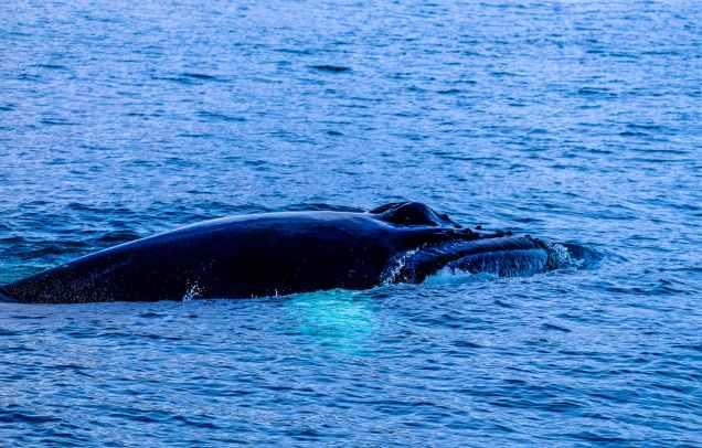 beach daylight mammal marine